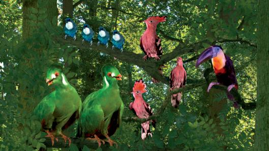 Green, pink, blue and multicoloured birds sitting on tree branches surrounded by greenery.